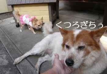 blog2012110204.jpg