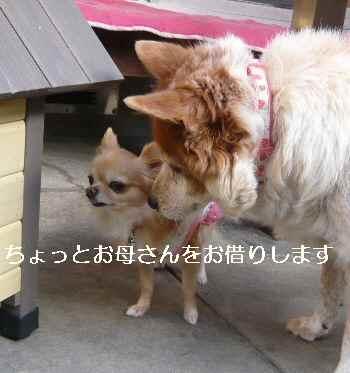 blog2012110206.jpg