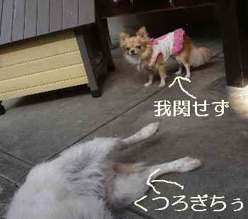 blog2012110207.jpg