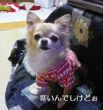 blog2012110301.jpg