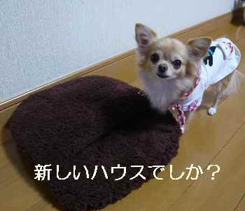 blog2012110705.jpg