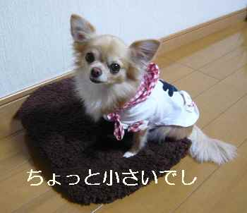 blog2012110706.jpg