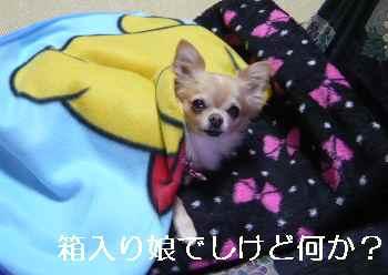 blog2012110801.jpg