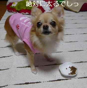 blog2012110908.jpg