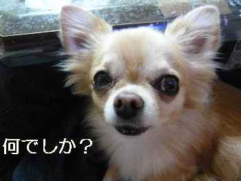 blog2012111002.jpg