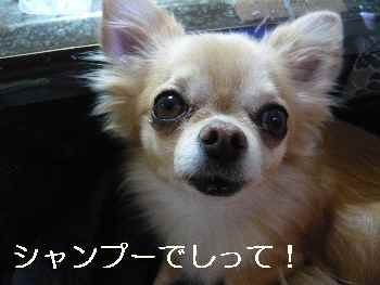 blog2012111003.jpg