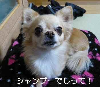 blog2012111004.jpg