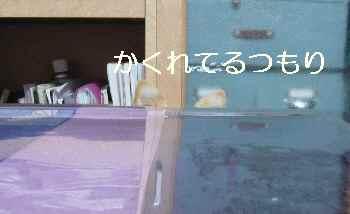 blog2012111204.jpg