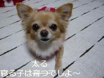 blog201211120401.jpg