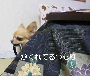 blog2012111205.jpg