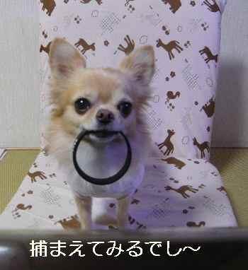 blog2012111206.jpg