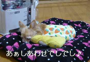blog2012111504.jpg