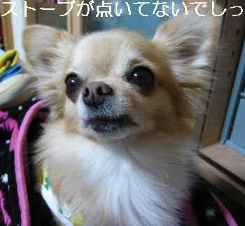 blog2012111601.jpg