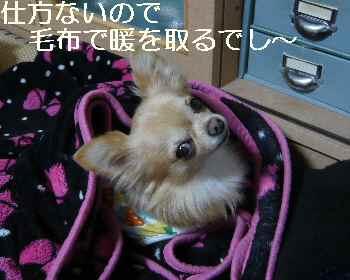 blog2012111602.jpg