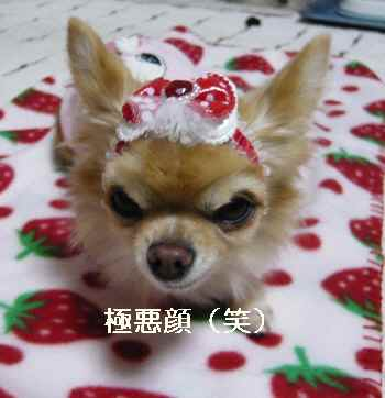 blog2012112403.jpg