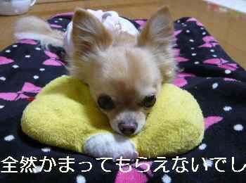blog2012112702.jpg