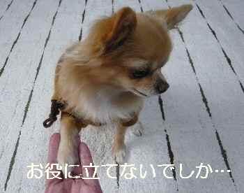 blog2012112906.jpg