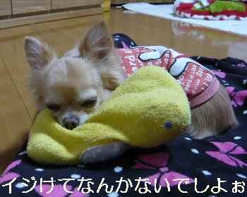 blog2012120303.jpg