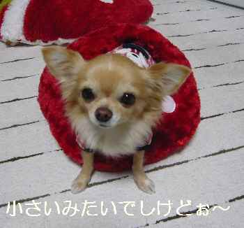 blog2012120802.jpg