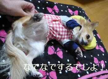 blog201212101.jpg