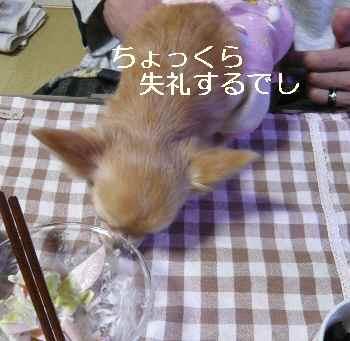 blog2012121306.jpg