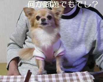 blog2012121309.jpg