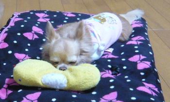 blog2012121505.jpg
