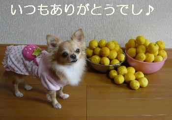 blog2012121603.jpg