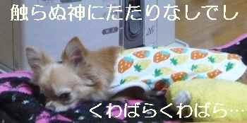 blog2012121901.jpg