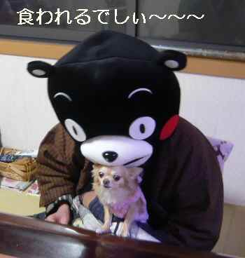 blog2012122505.jpg