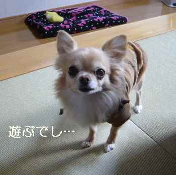 blog2012122602.jpg