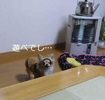 blog2012122603.jpg
