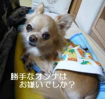 blog2012122801.jpg