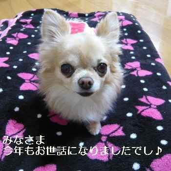blog2012123101.jpg