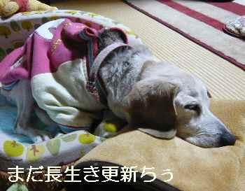 blog2013010301.jpg