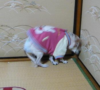 blog2013010303.jpg
