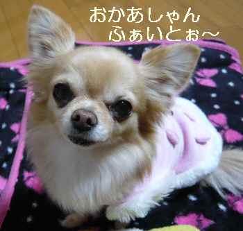 blog2013010605.jpg