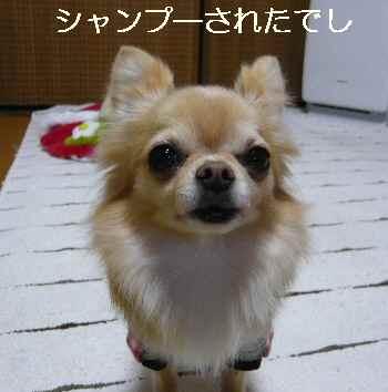 blog2013011706.jpg