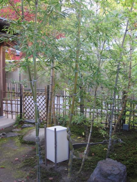 雅やかなお庭2