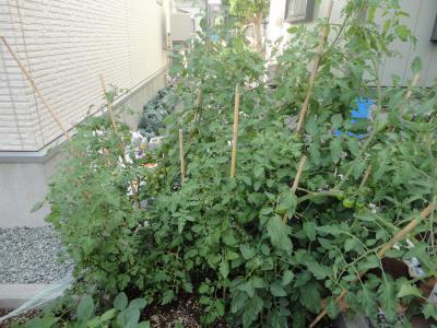 トマト2convert