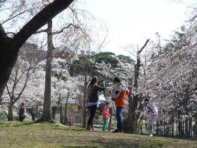 kaiseisakura2.jpg