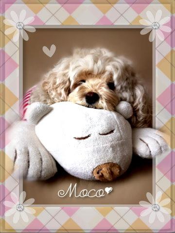 moco04 09