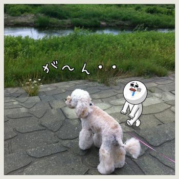 豊平川散歩
