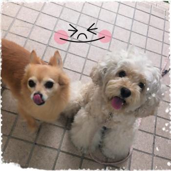モコ&サンちゃん
