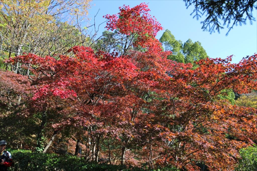 紅葉の様子_3