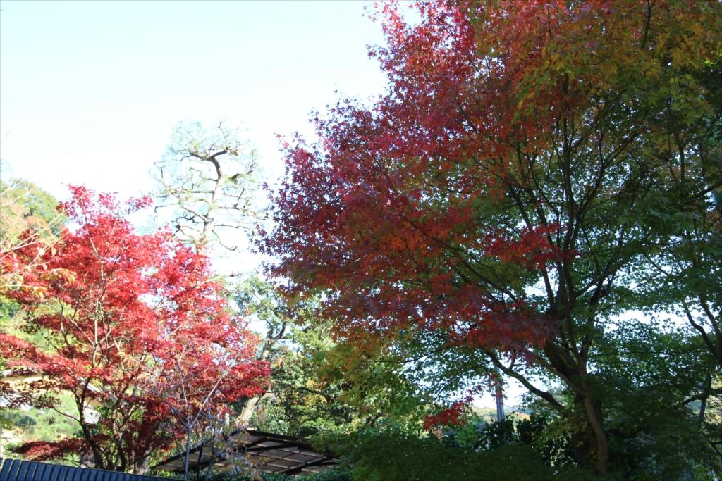 民家の庭先に少し紅葉があった