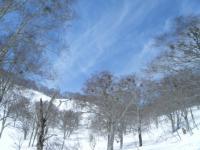 巨木の森⑤