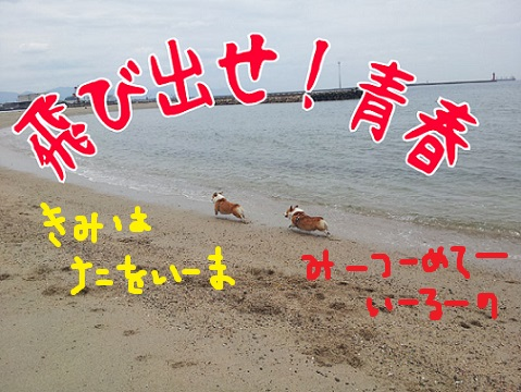 20130527-5.jpg