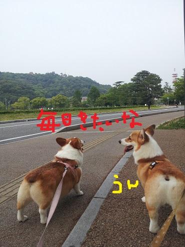 20130606-4.jpg