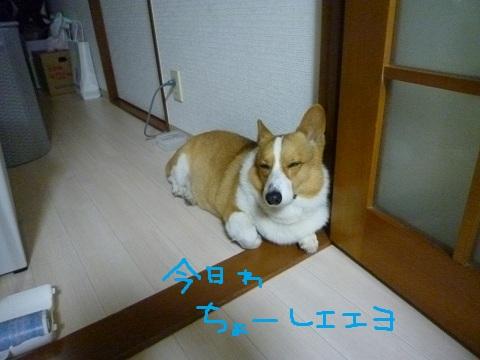 azu0620-6.jpg